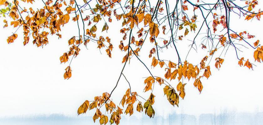 初冬的田野-苘庄湖人