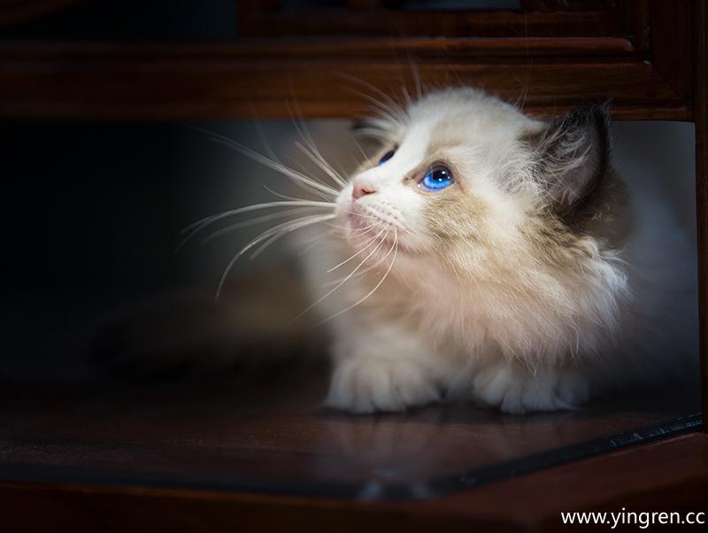 发现目标-微笑猫咪