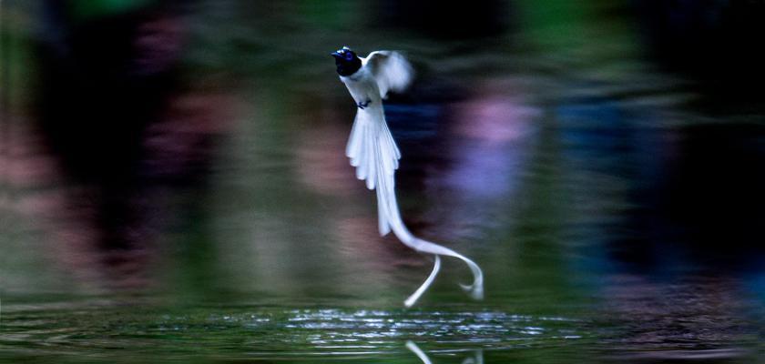水上芭蕾-昆山人